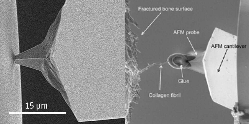 Stress strain behavior of fibrous biological material measured using an AFM SEM hybrid SEM   Legacy prod MIC