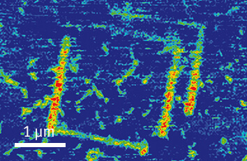 Piezoresponse Force Image on BFO cryogenic atomic force microscope attoAFM for PFM
